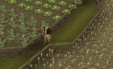 Miscellania crop fields