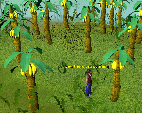 Look at all these banana trees!