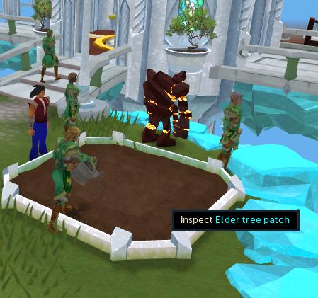 Elder tree patch
