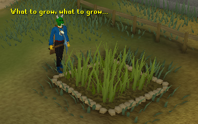 A farming patch
