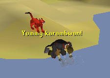 Fishing for karambwan