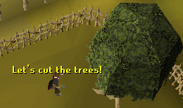Cutting a mohogany tree