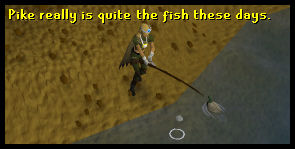 Fish for pike