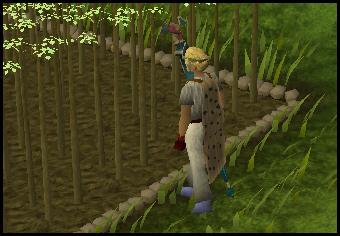 Jute plants