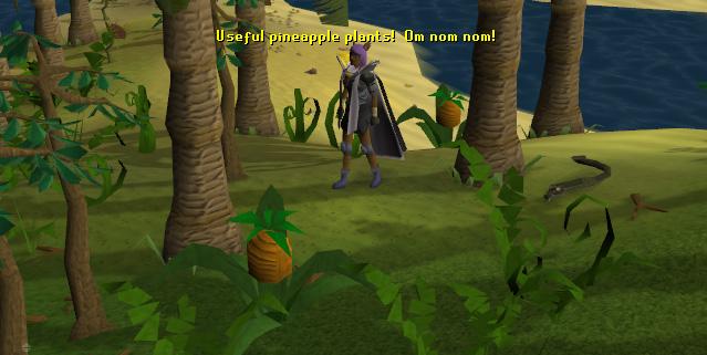 A tasty pineapple plant!