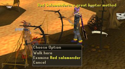 A Salamander hunting area
