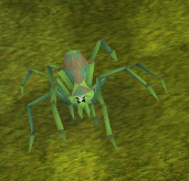 Jungle Spider (level 44)