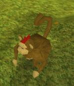 Monkey (level 3)