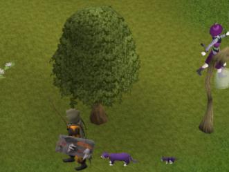 A purple cat!