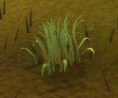 Patch of Fever grass