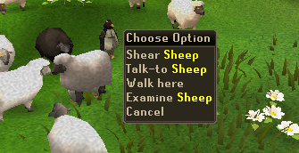 Talk to sheep