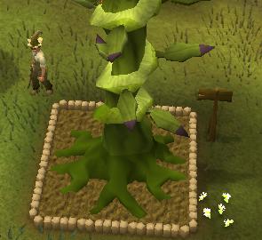 A beanstalk!