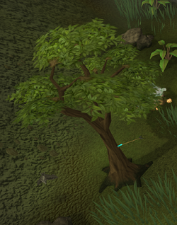 Investigate the tree that has an arrow stuck in it