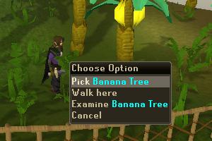 Pick Banana Tree