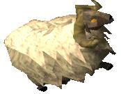 Sheep/Ram