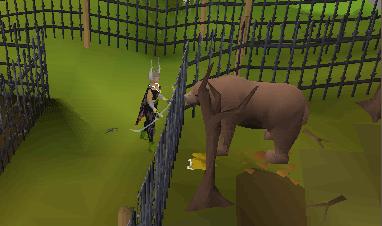Ranging bears
