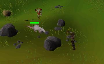 Ranging rats