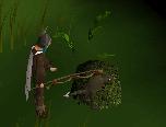Captured feldip weasel