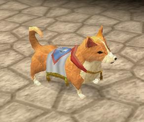 A pet Corgi!