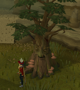 Spirit Tree east of the poisonous waste