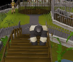 Gorilla's appearance