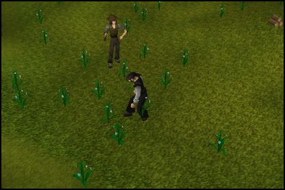 Gathering Flax